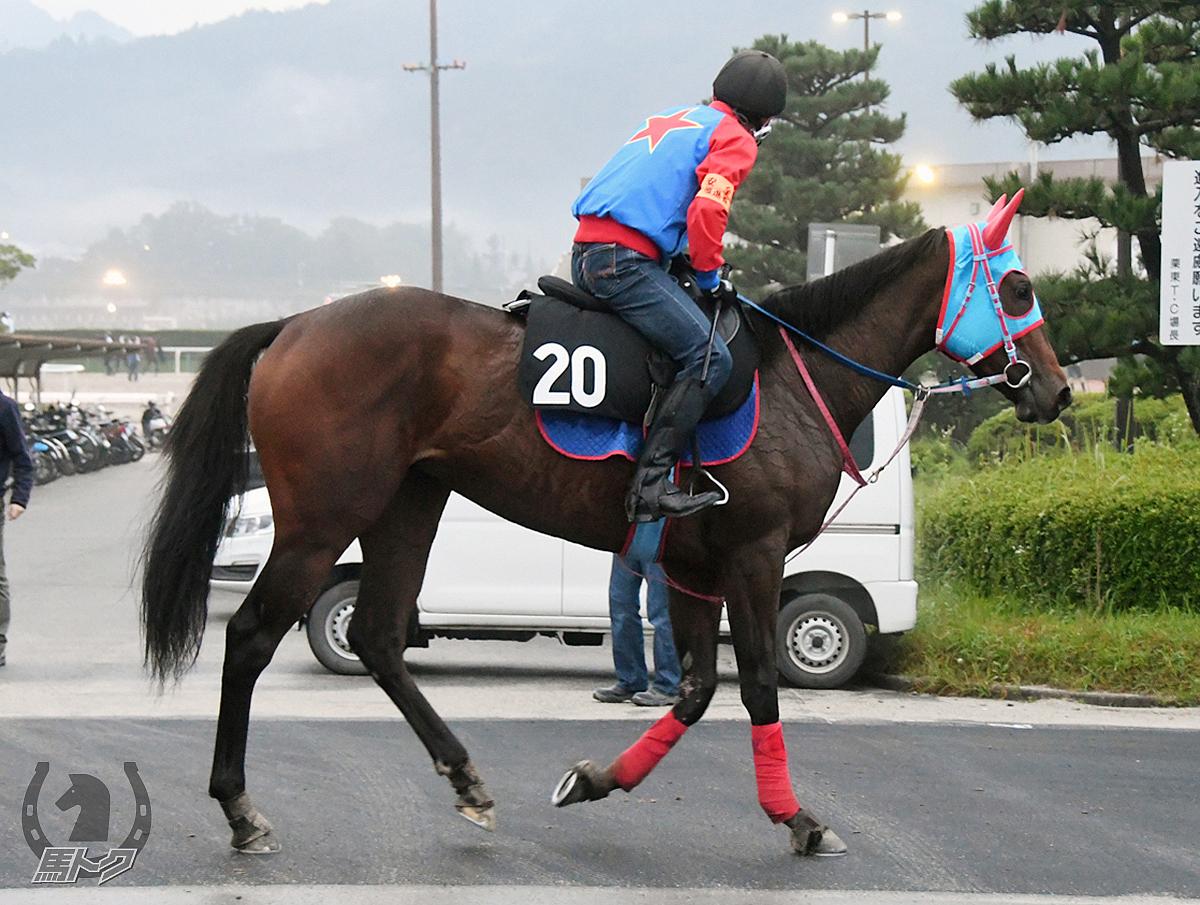 アオイエンジェルの馬体写真