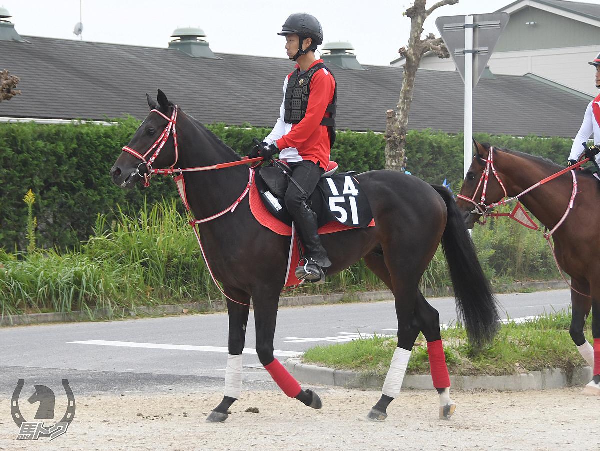 アールコンセンサスの馬体写真