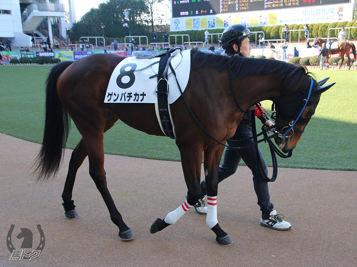 ゲンパチカナの馬体写真