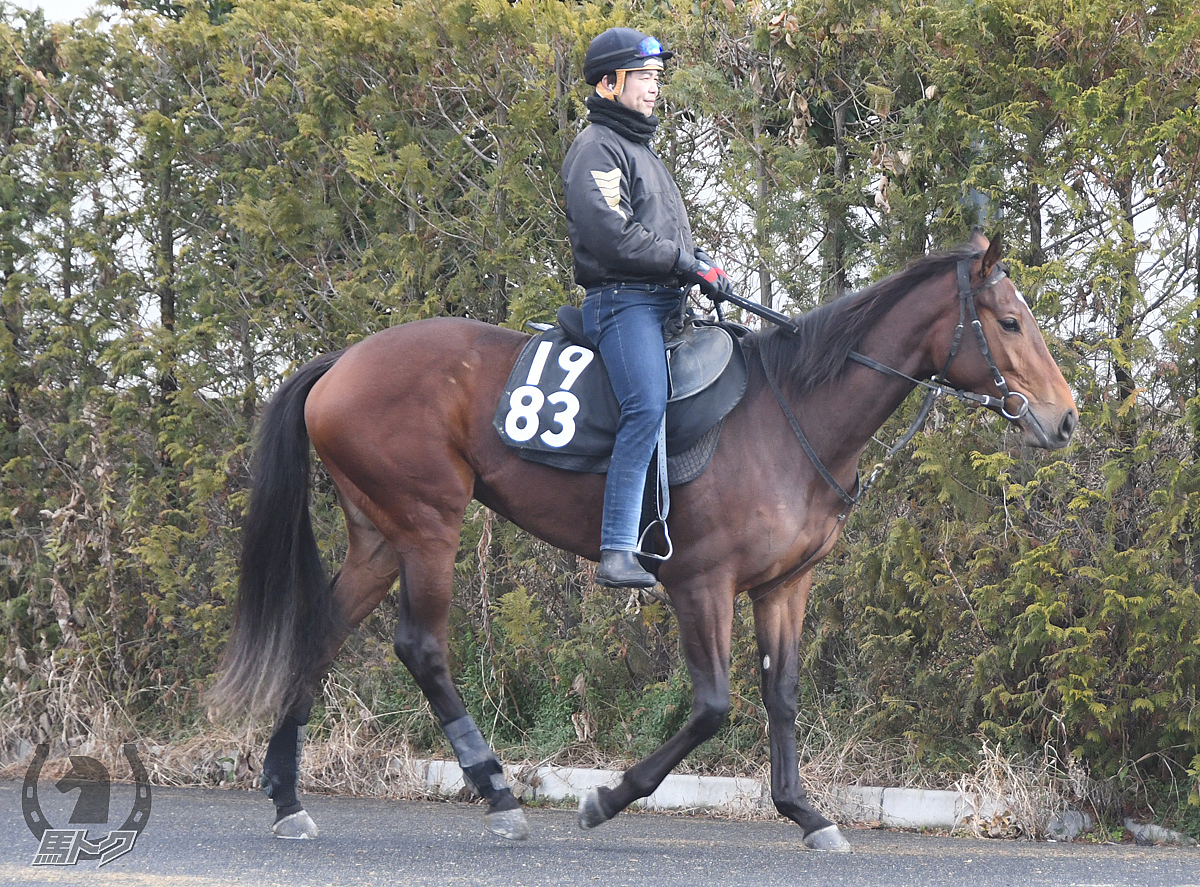 モモコの馬体写真
