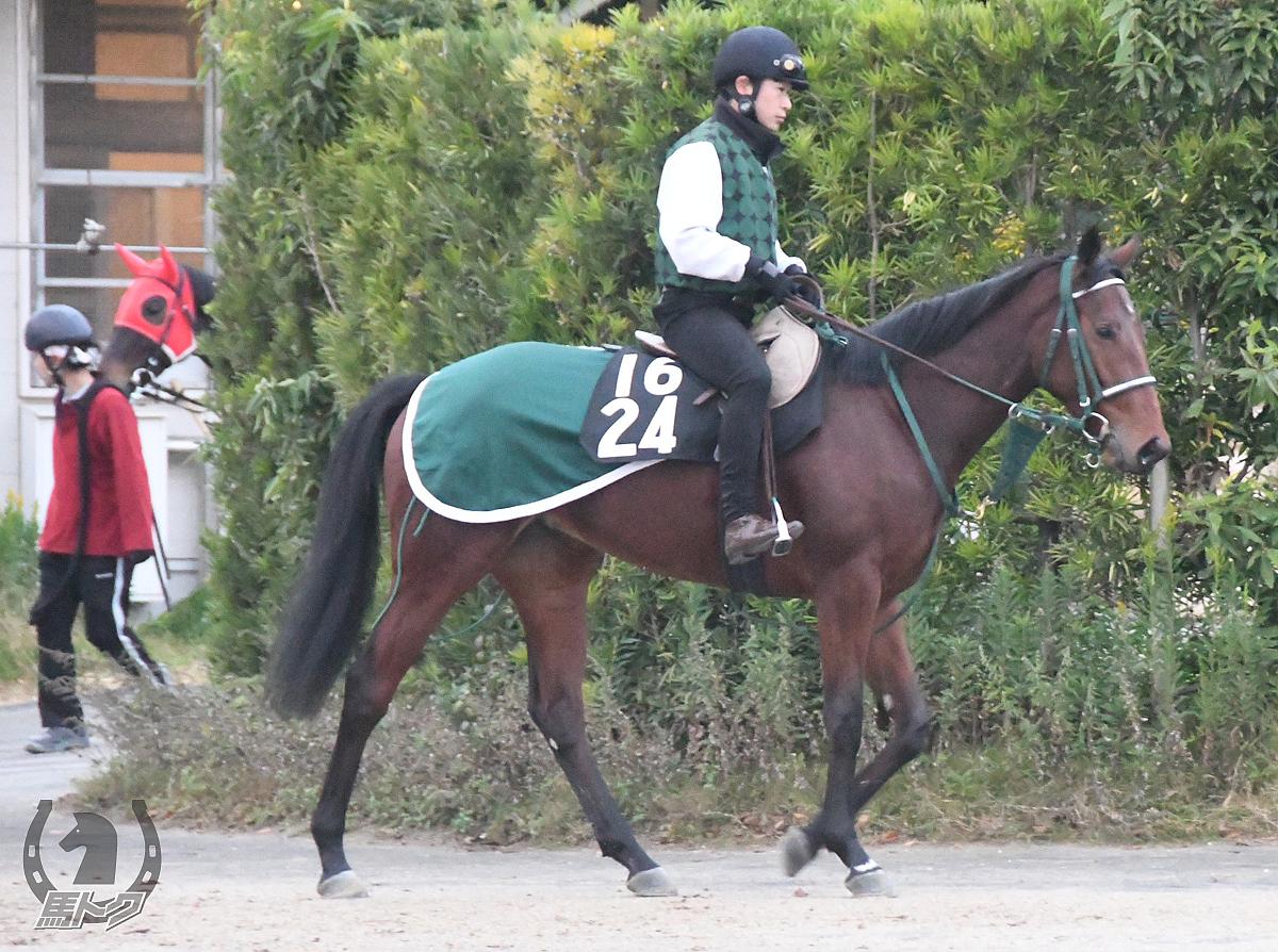 バトルウインリンクの馬体写真