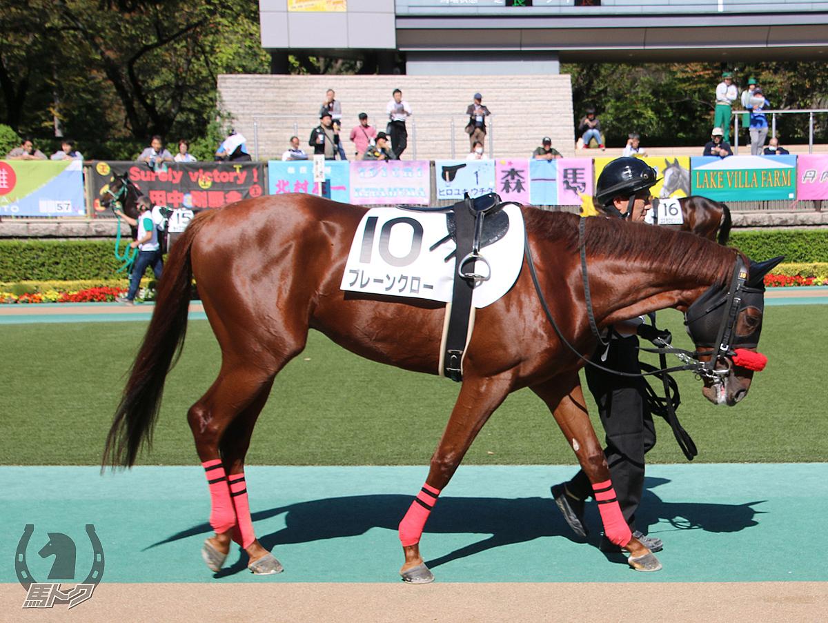 ブレーンクローの馬体写真
