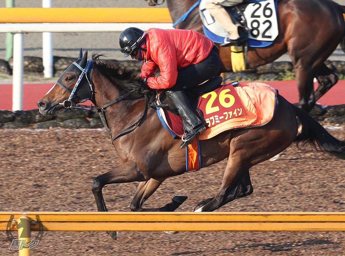 ラブミーファインの馬体写真