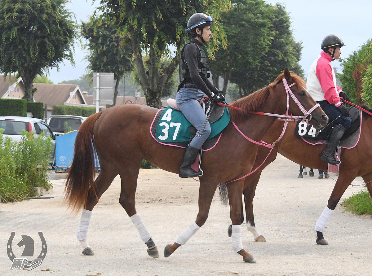 アールロッソの馬体写真