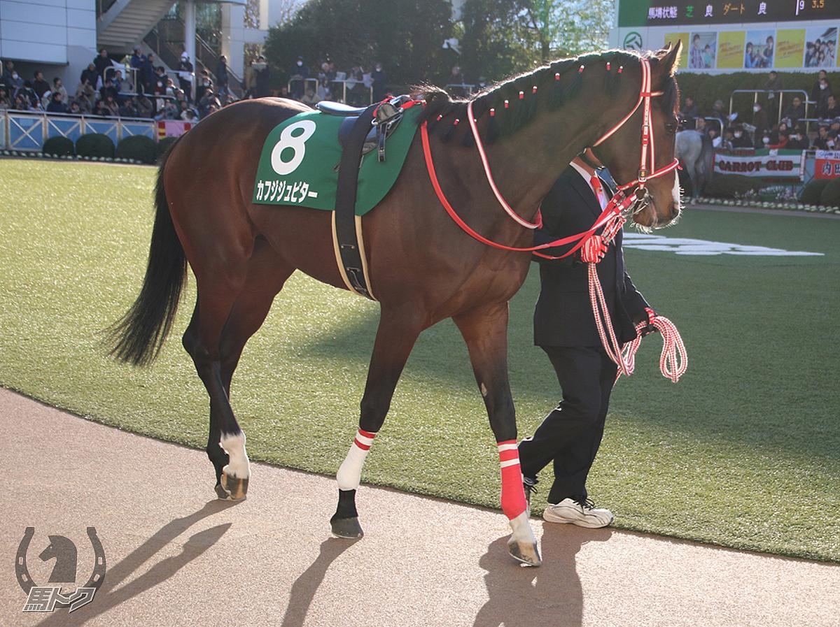 カフジジュピターの馬体写真
