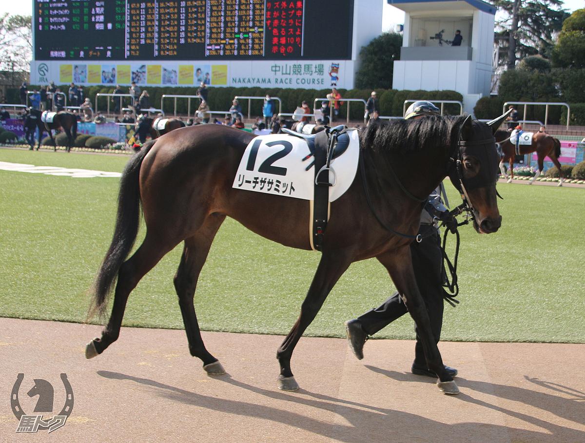 リーチザサミットの馬体写真