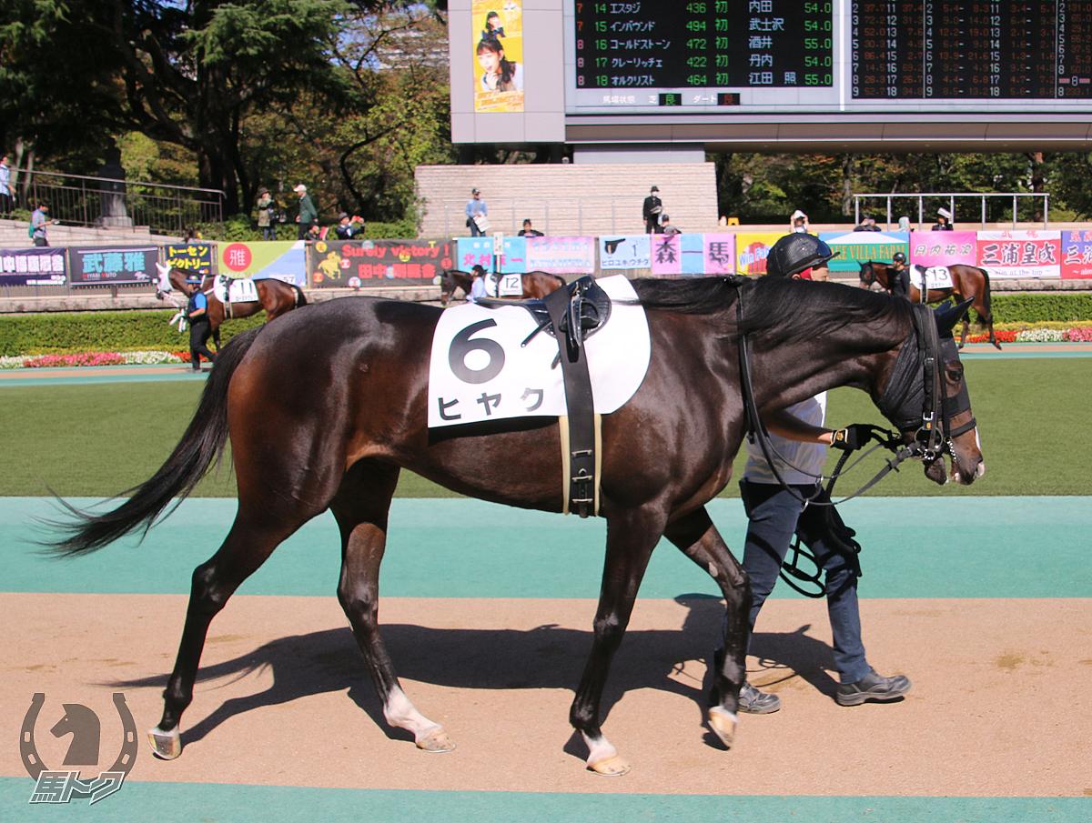 ヒヤクの馬体写真