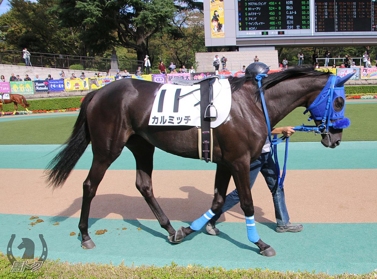 カルミッチの馬体写真