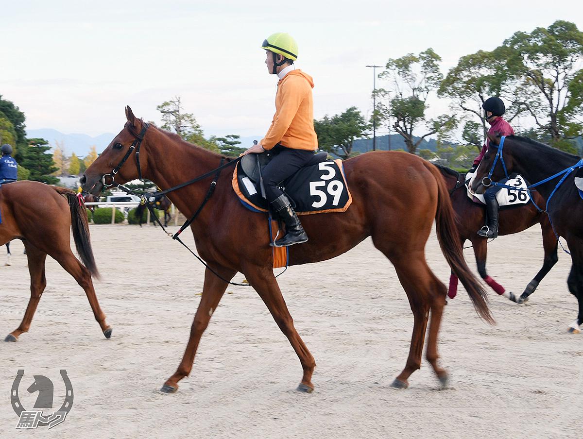 タイサイの馬体写真