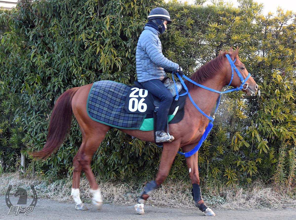 ニューアビリティの馬体写真