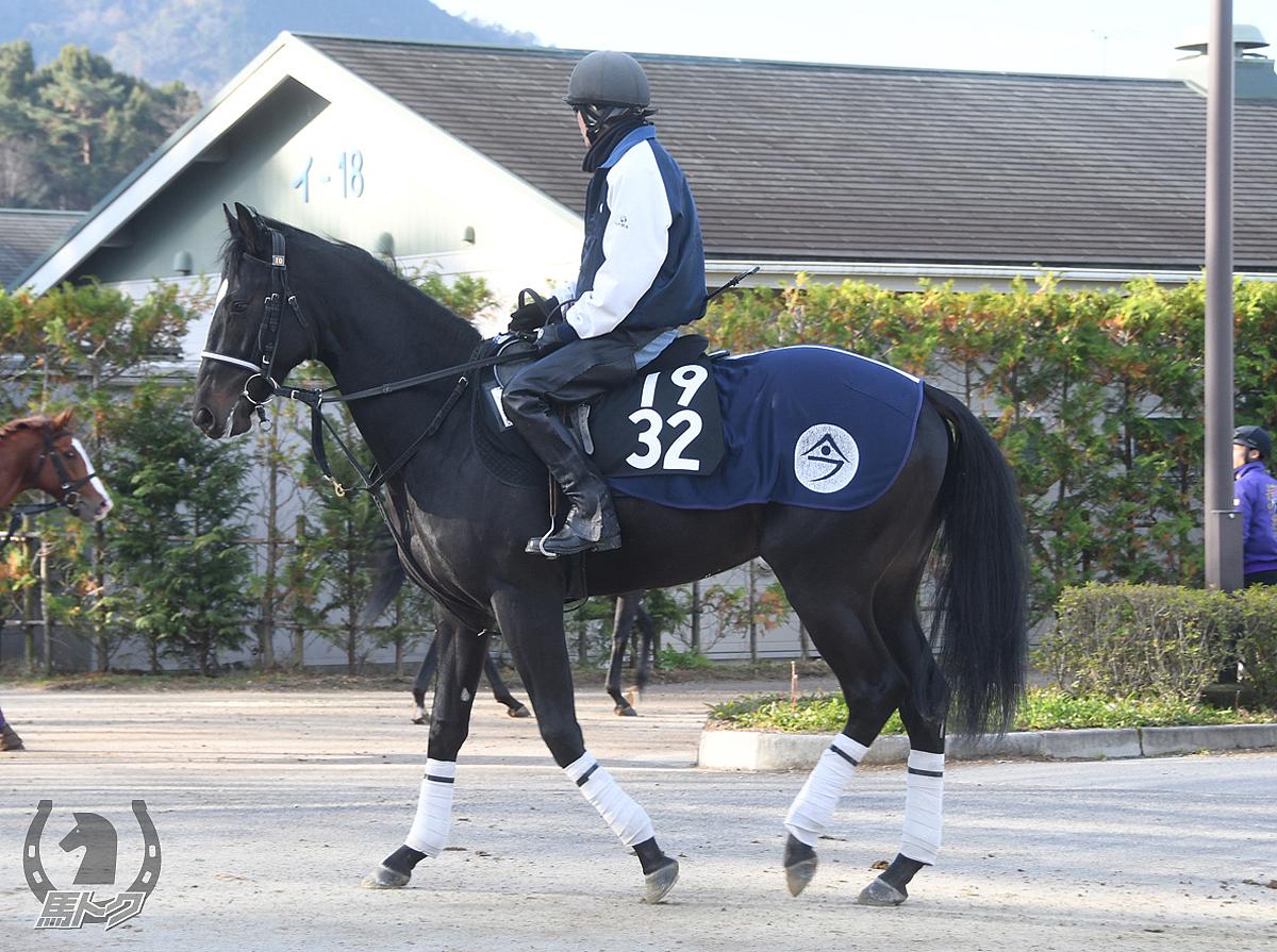ジューンステータスの馬体写真