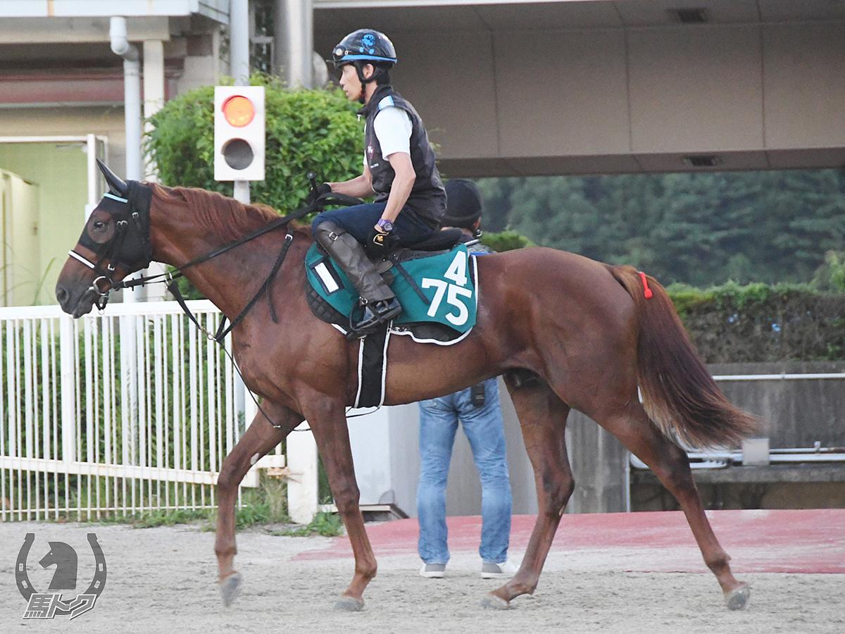エイシンボールディの馬体写真