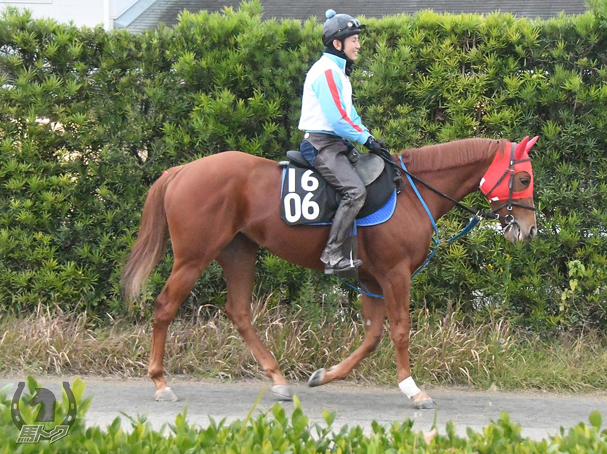 エイシンポタラの馬体写真