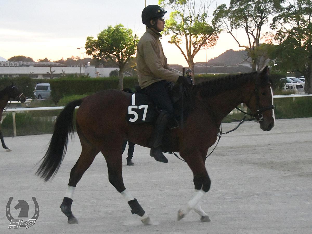 エイシンポジションの馬体写真