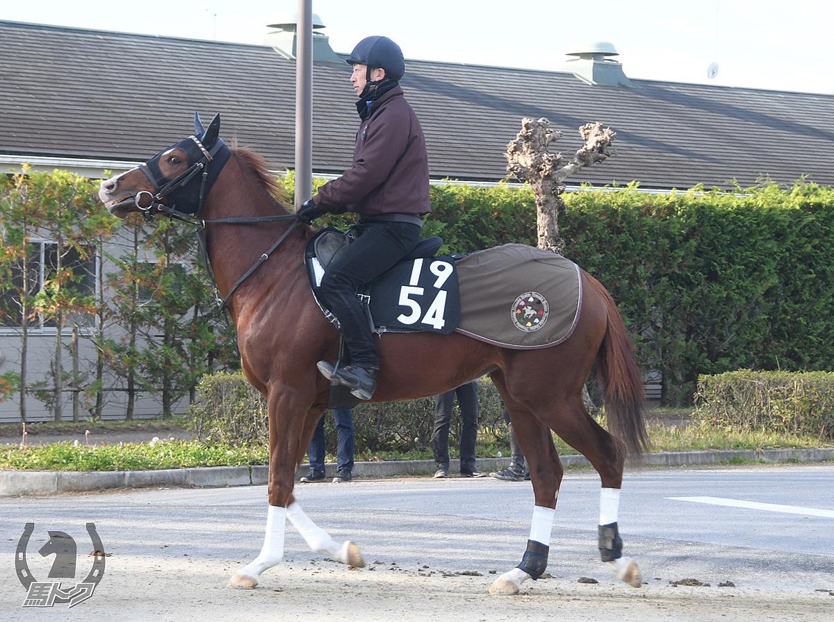 エイシントロピコの馬体写真