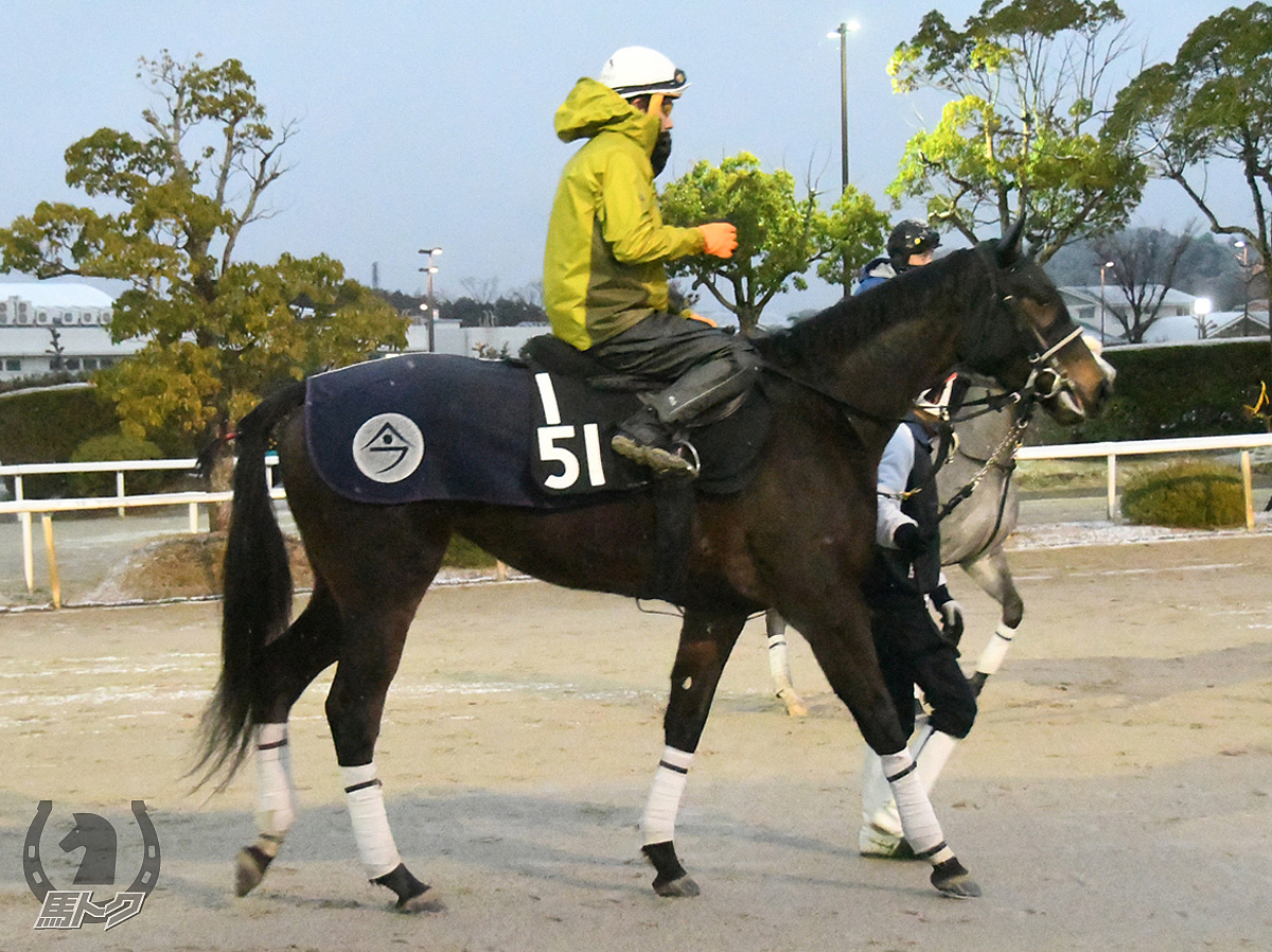 エイシンコロンビアの馬体写真