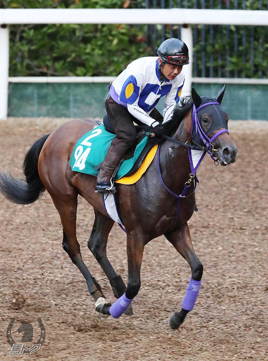 エイシンゾーンの馬体写真