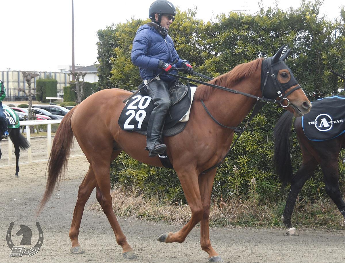 エイシントキシラズの馬体写真