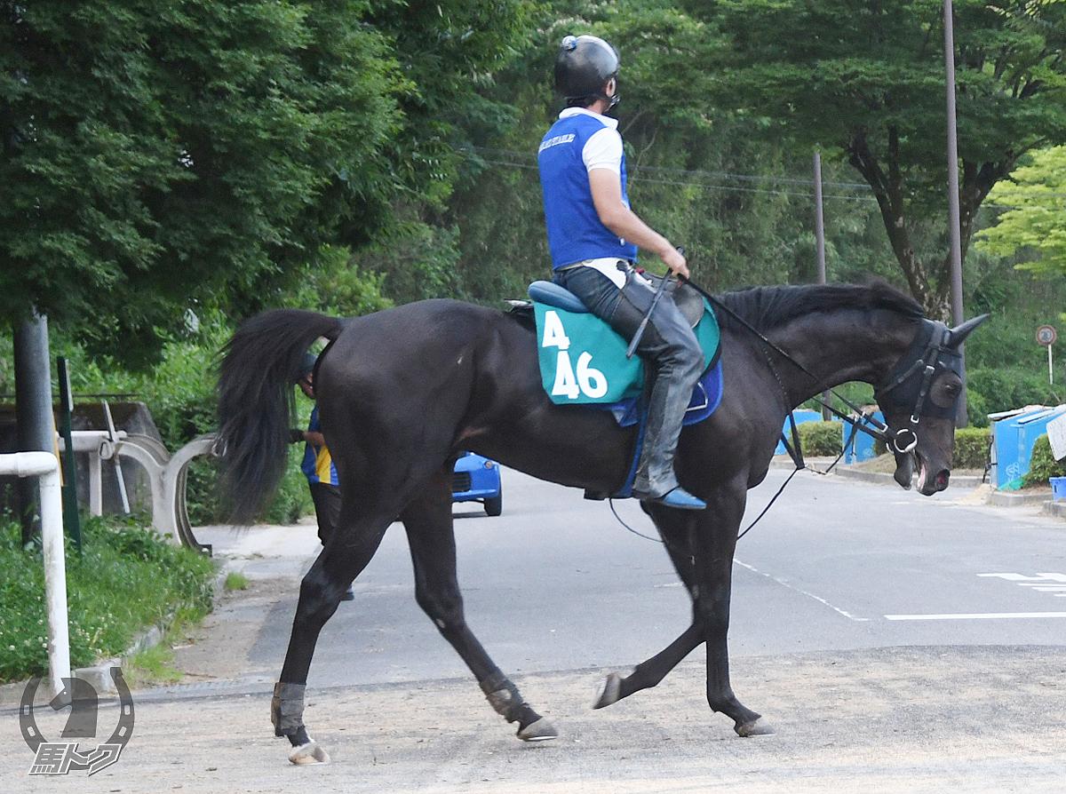 エイシンオーディンの馬体写真