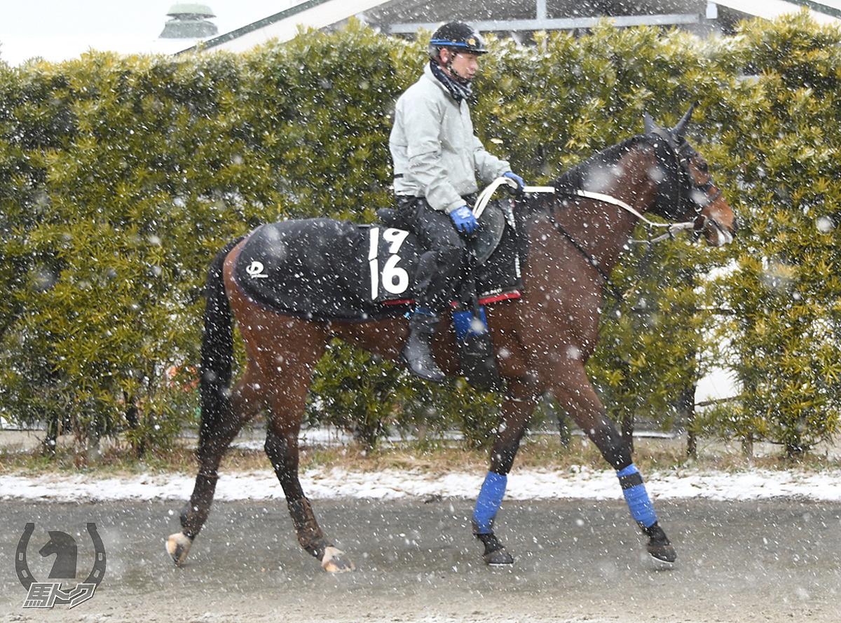 エイシンモンクールの馬体写真