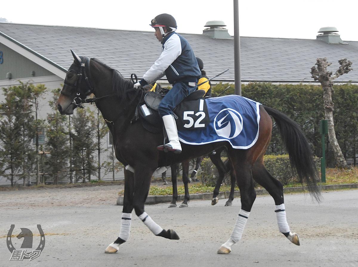 エイシンジョーカーの馬体写真