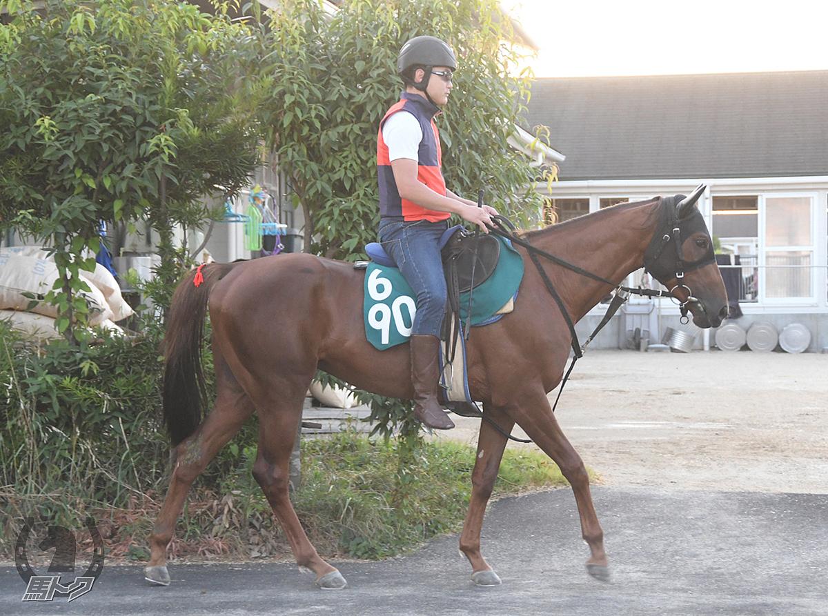 パープルカムカムの馬体写真