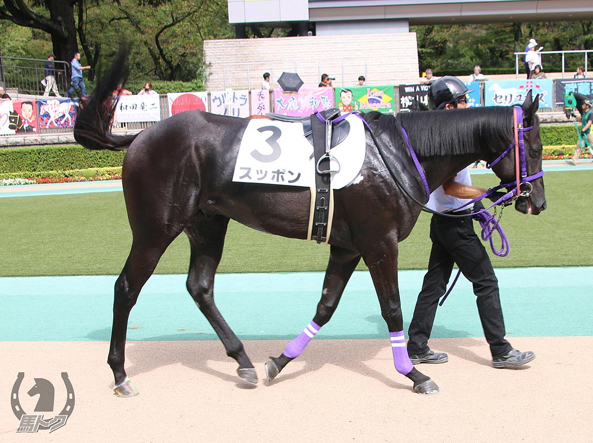 スッポンの馬体写真