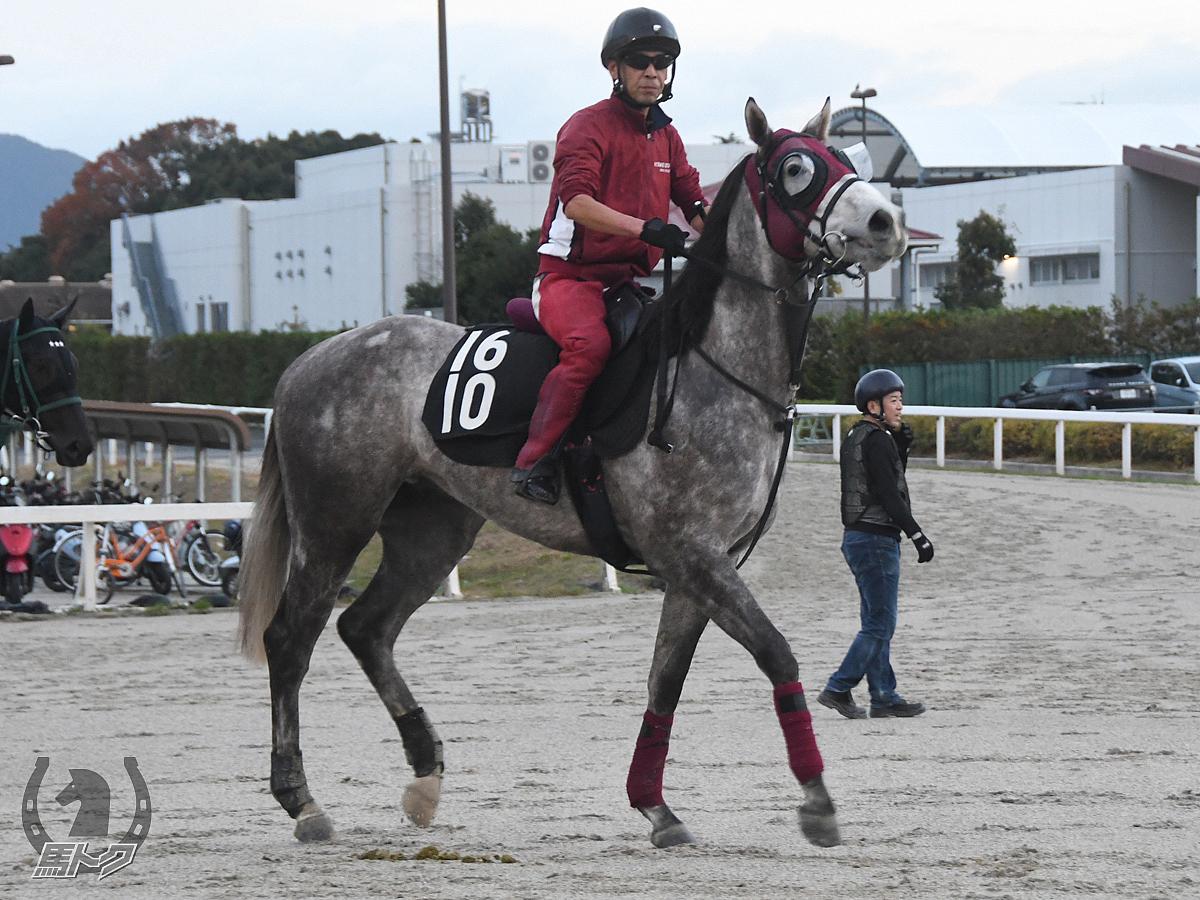 テイエムイブシギンの馬体写真