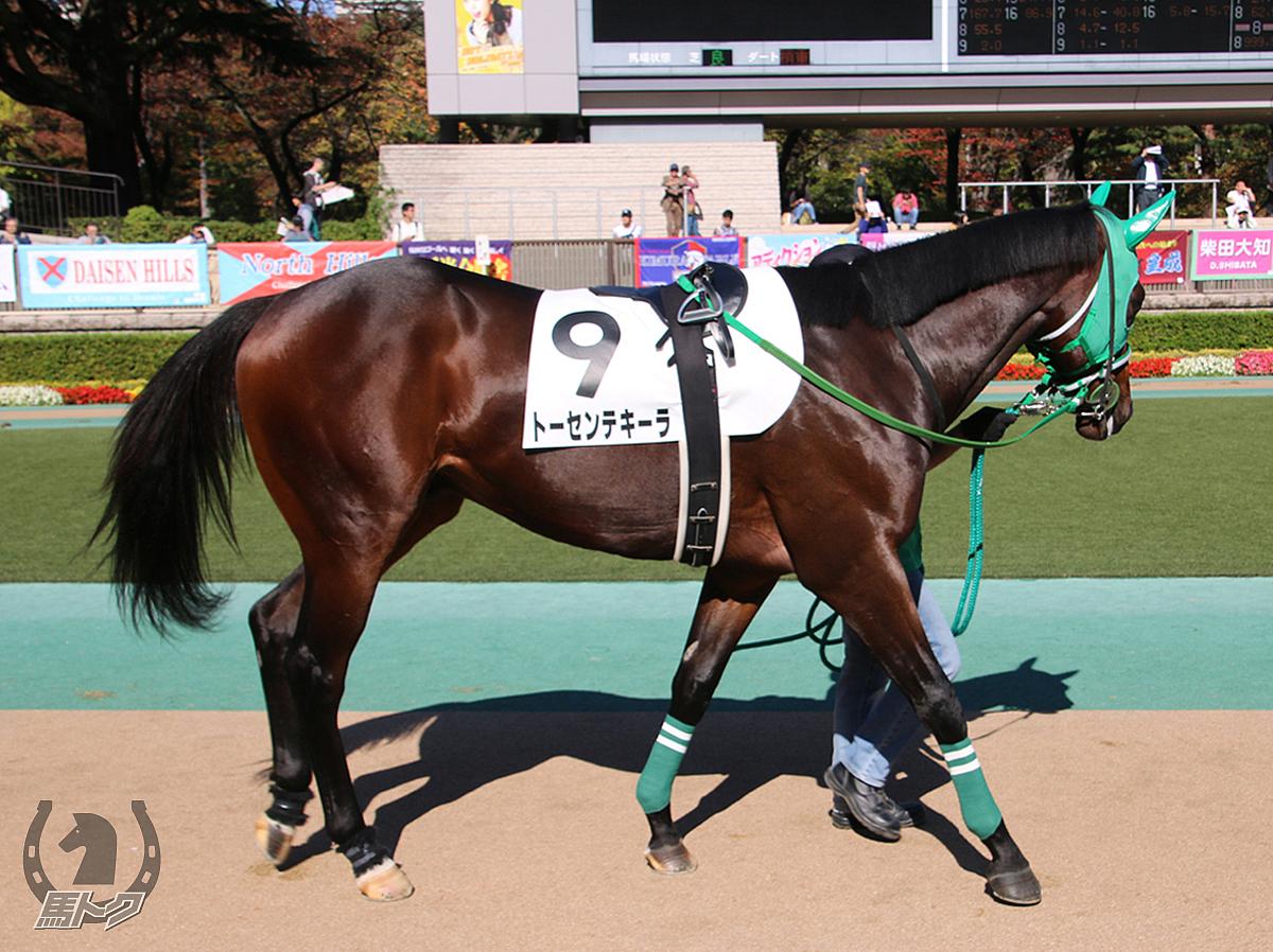 トーセンテキーラの馬体写真