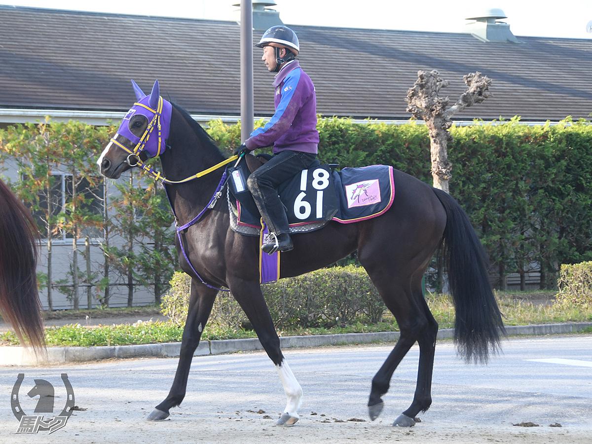 テーオーキャンディの馬体写真
