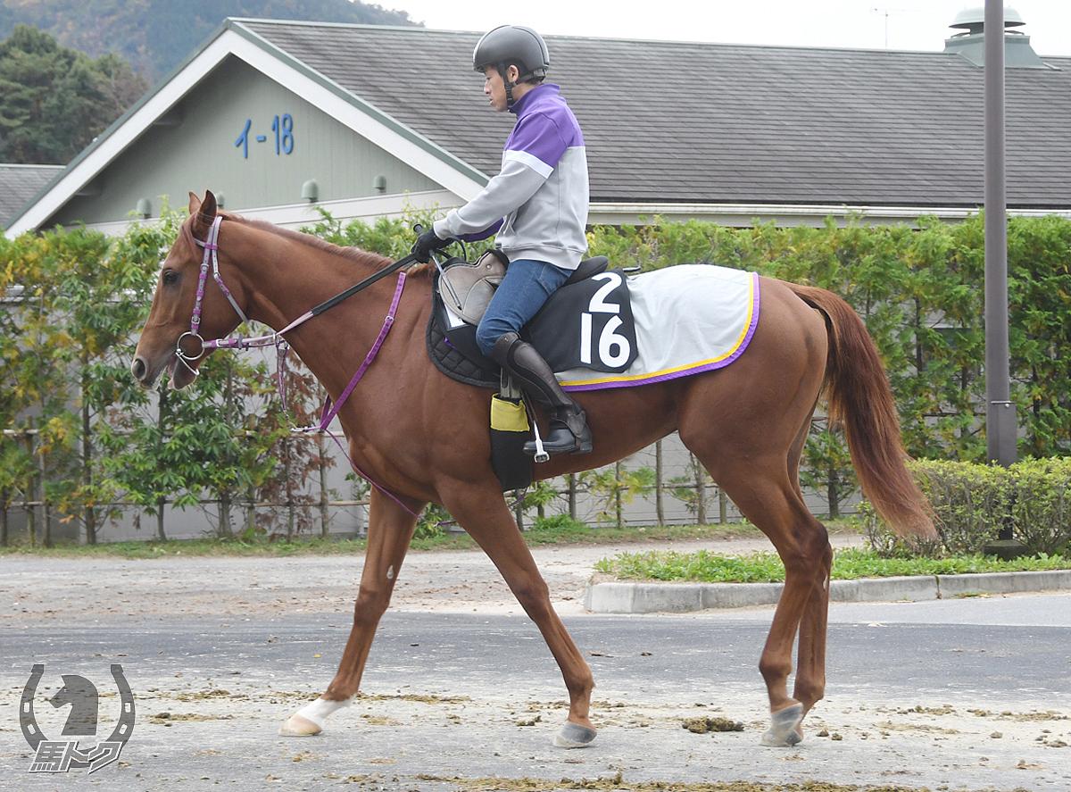 カイマナの馬体写真