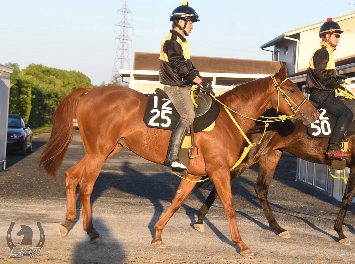 テーオーパラダイスの馬体写真