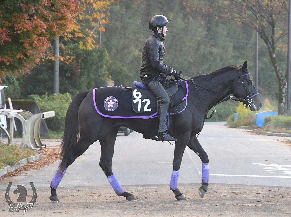 テーオーアマゾンの馬体写真