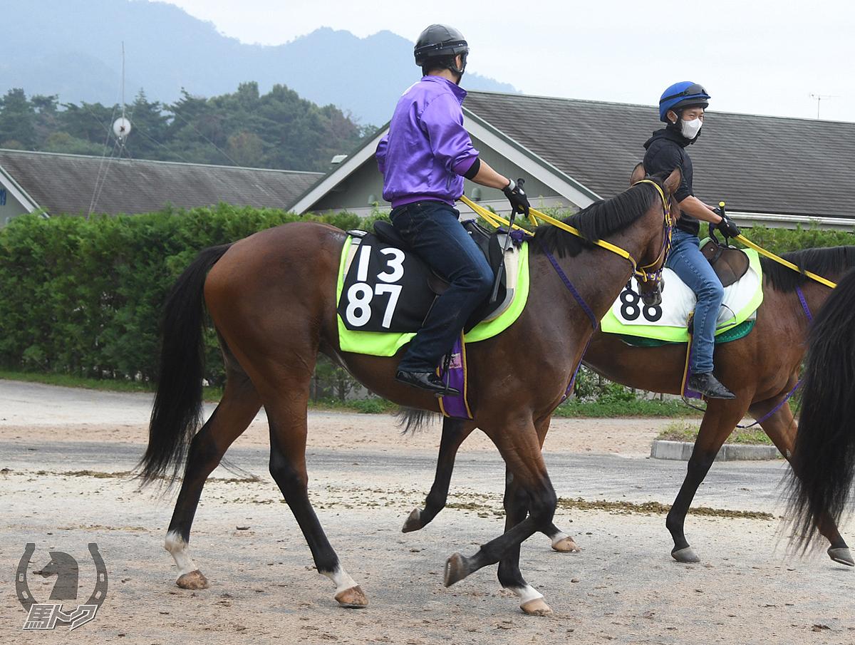 テーオーポシブルの馬体写真
