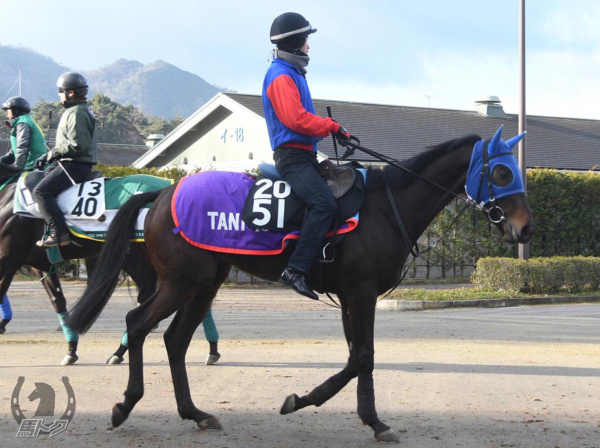 ハハハの馬体写真