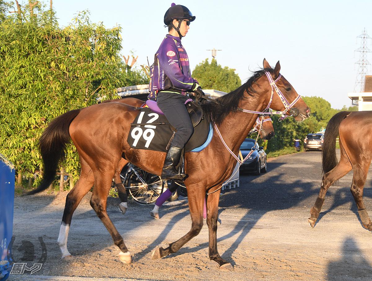 ジュンユウコーの馬体写真