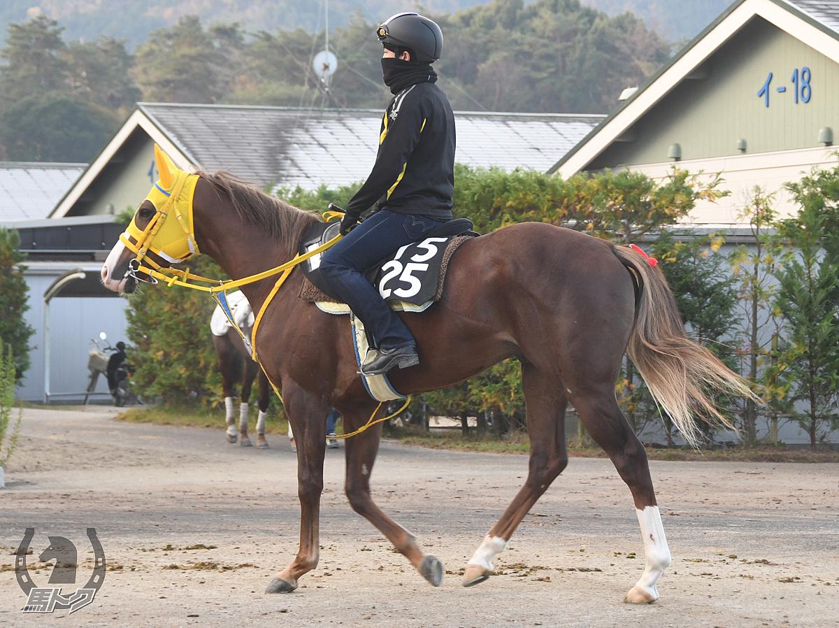 ライクトゥシャインの馬体写真