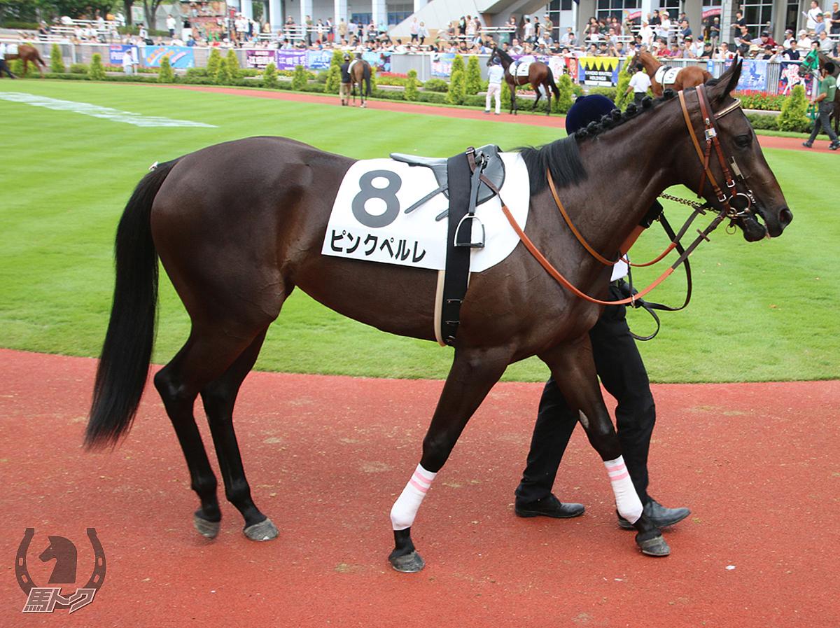 ピンクペルレの馬体写真