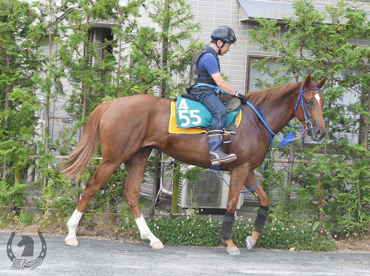 クリノビッグサージの馬体写真