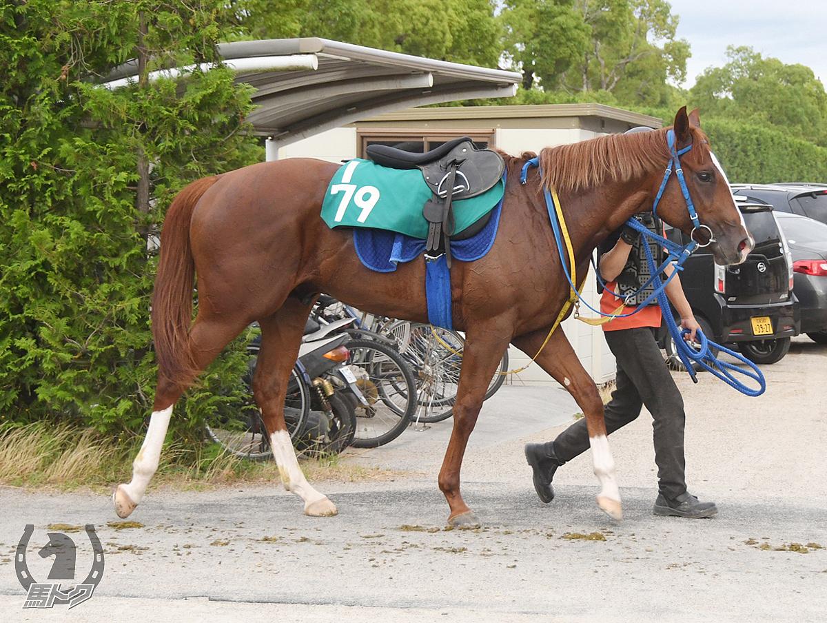 スズカモンドの馬体写真