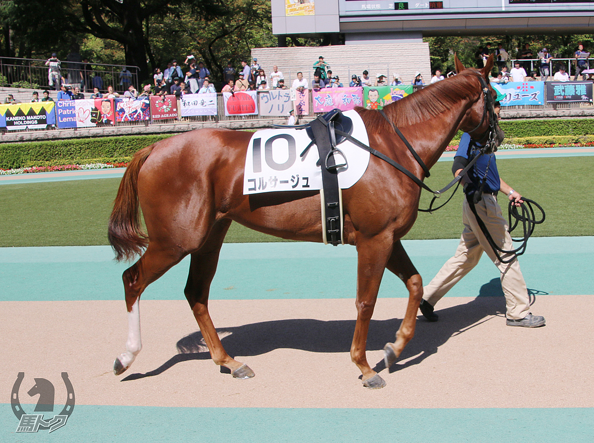 コルサージュの馬体写真