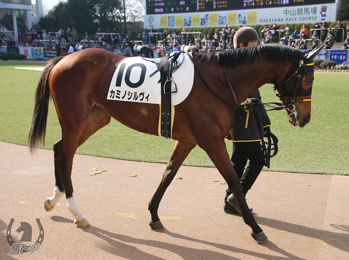 カミノシルヴィの馬体写真