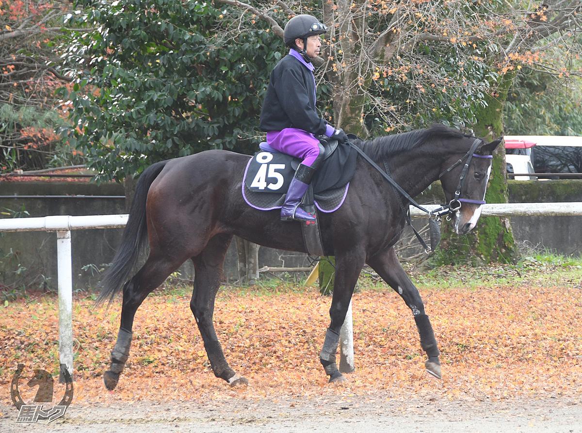 テイエムノサッタの馬体写真