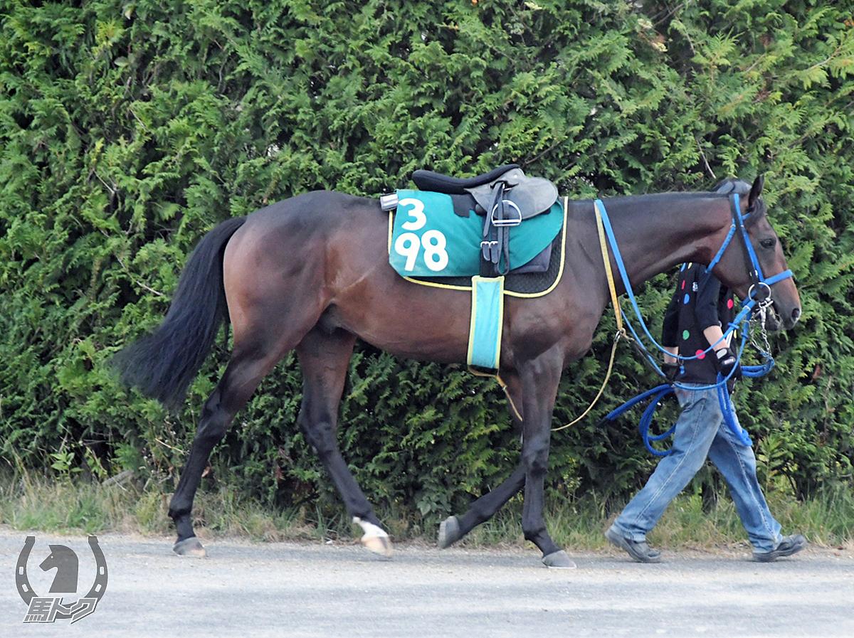 テイエムフガエゾの馬体写真