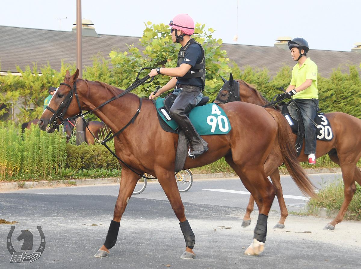 テイエムヒッパシレの馬体写真