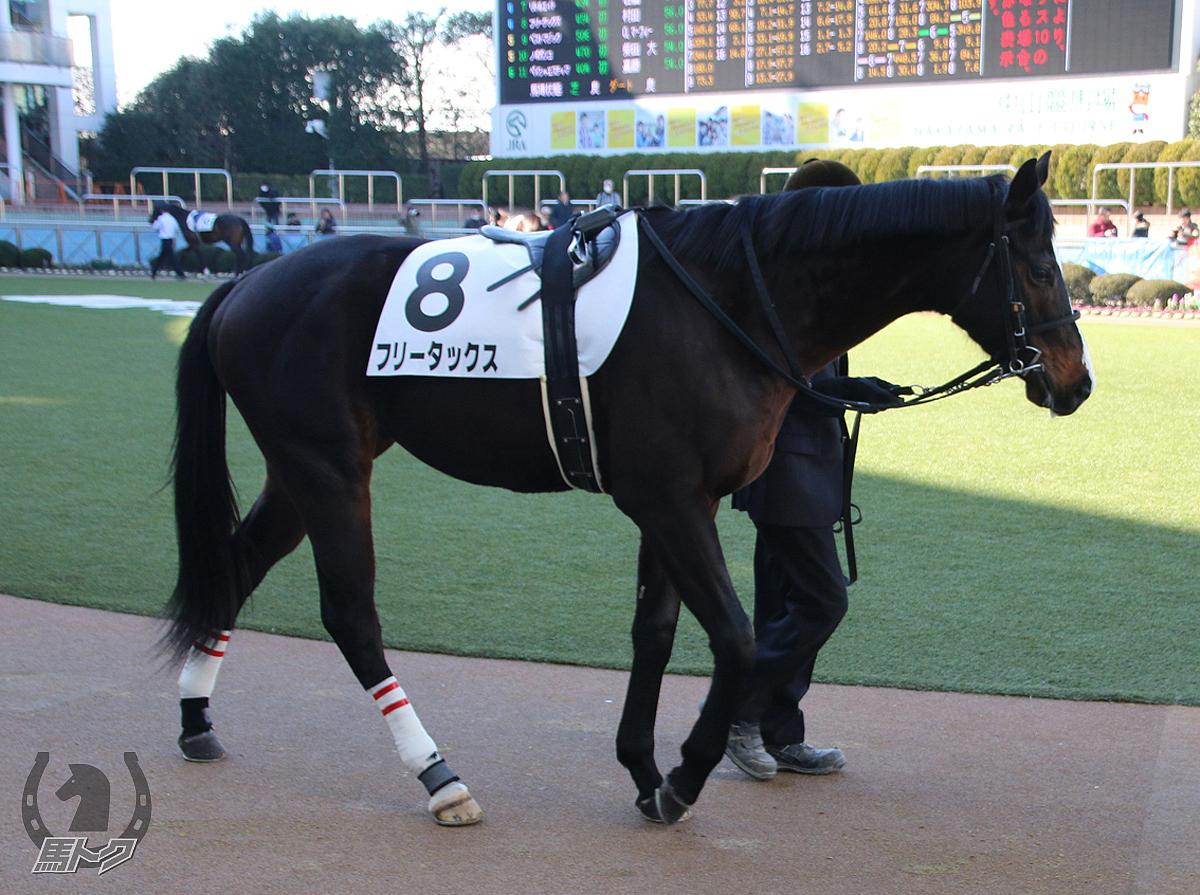 フリータックスの馬体写真