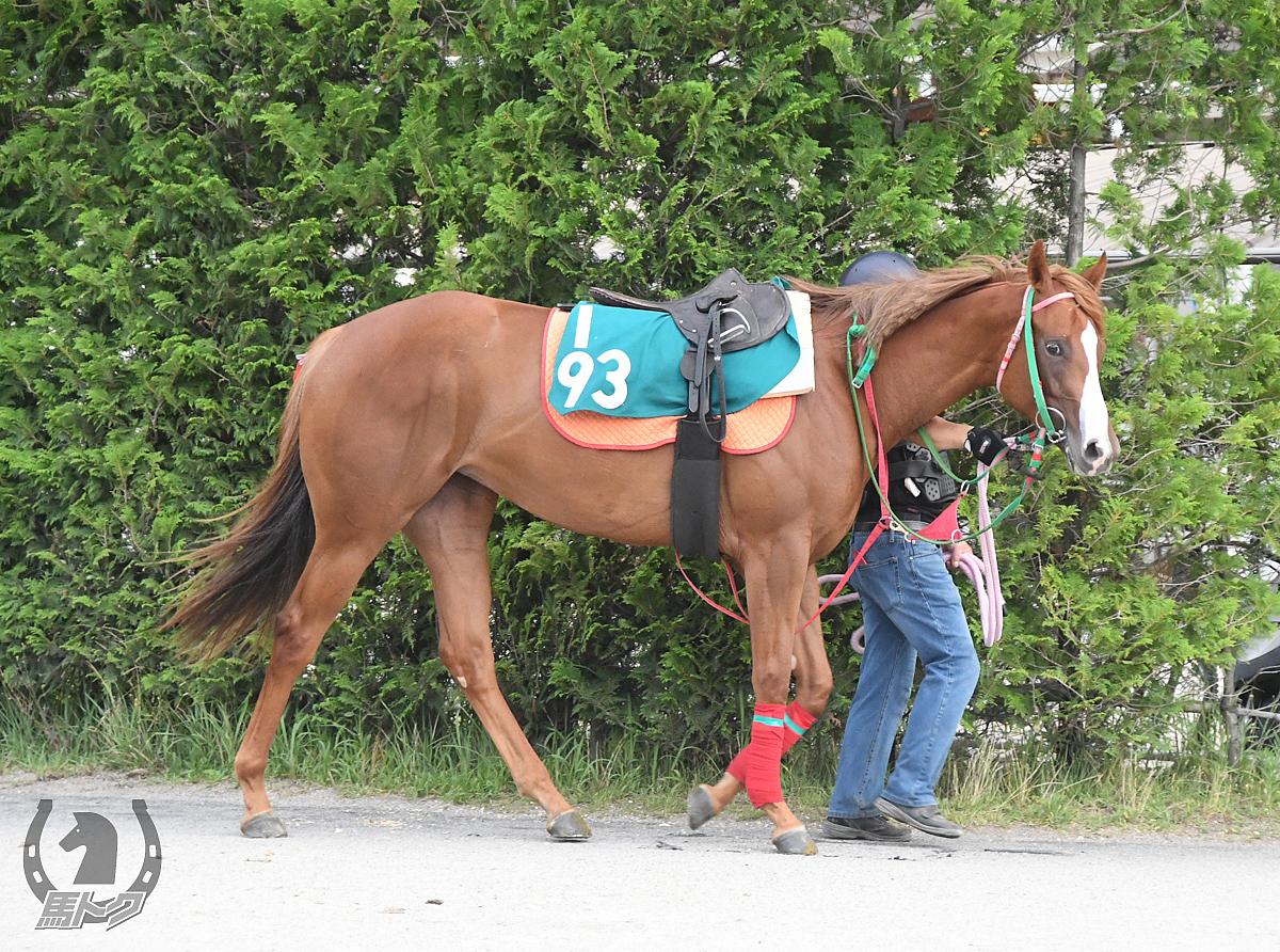 ダンツブライトの馬体写真