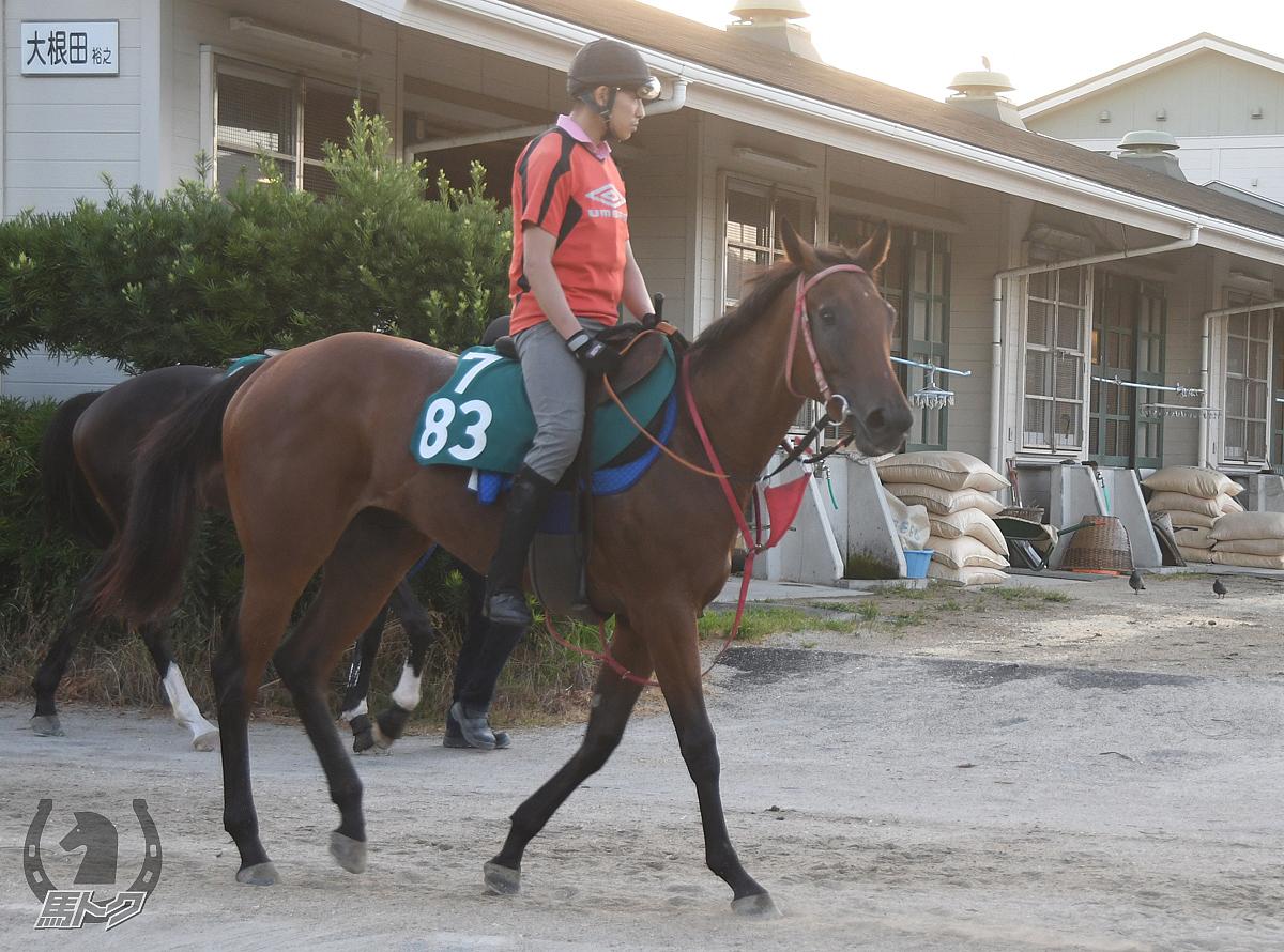 リーチザプリンセスの馬体写真