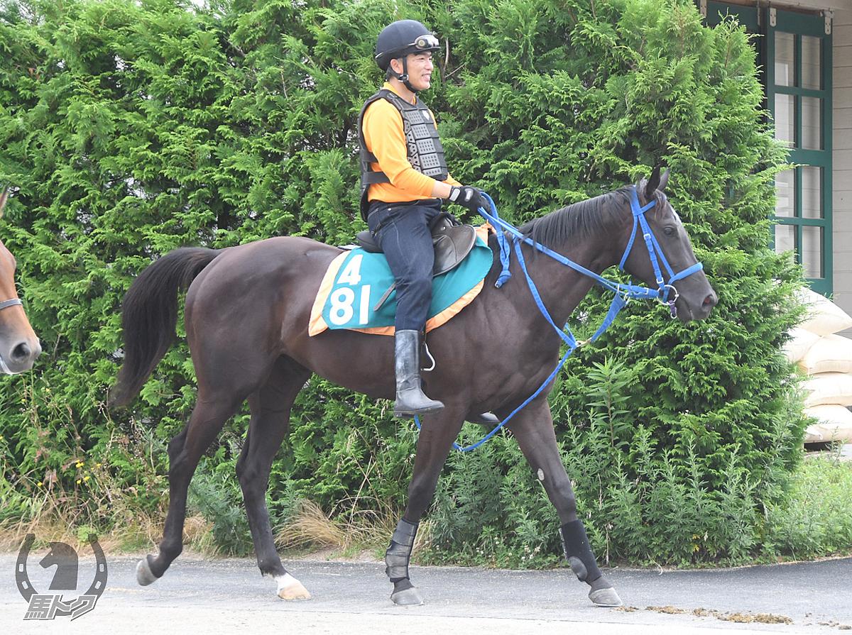 カシノティーダの馬体写真