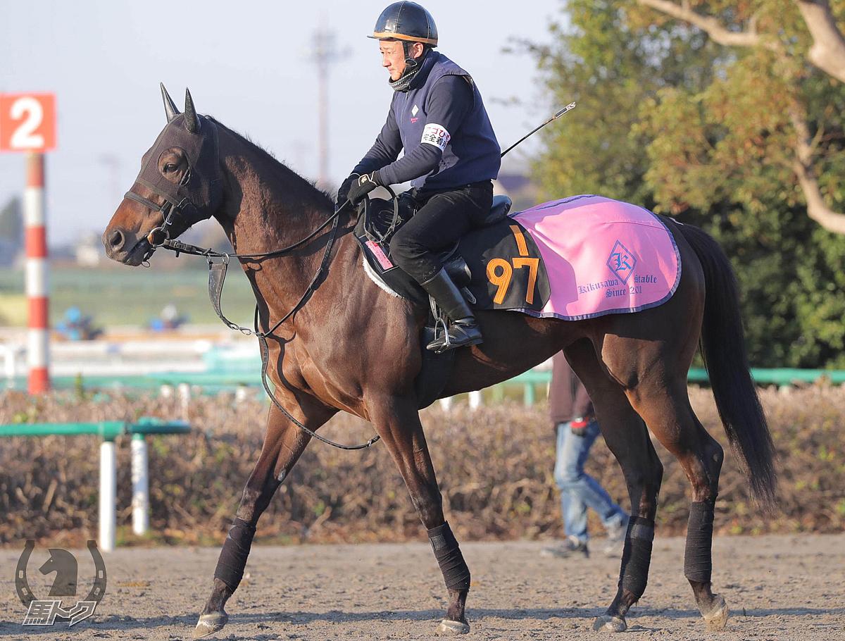 エリーバラードの馬体写真